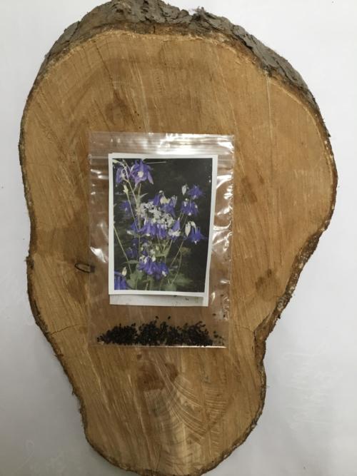 Garden Flower Columbine Seeds Lucy Erridge