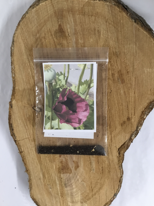 Garden Flower Purple Poppy Lucy Erridge
