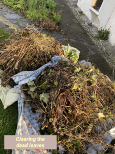 Debris from our cottage garden Lucy Erridge Adare