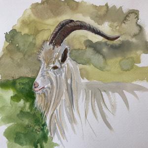 Cashmere goat watercolour painting by Lucy Erridge Knitwear Designer Adare Limerick Ireland