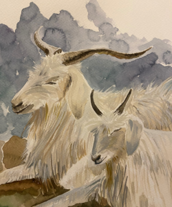 Cashmere goats painted in watercolour by Lucy Erridge Knitwear designer Adare Limerick Ireland