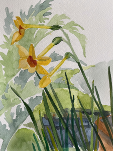 A watercolour of minature narcissus