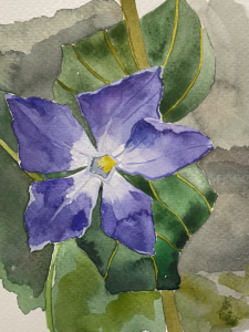 A watercolour of a Perriwinkle flower