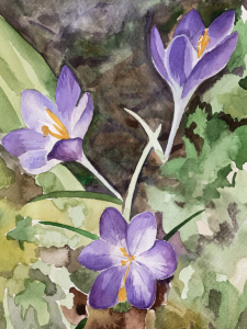 A watercolour of Crocus Flowers