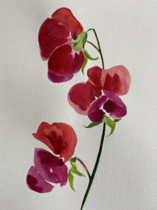 Watercolour painting of Sweat Pea